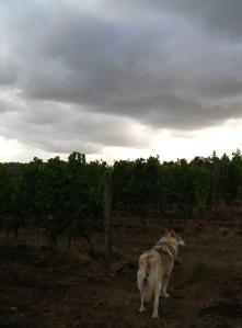 Raincloluds over Bethel Heights