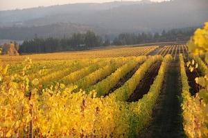 gold-vines-long-row